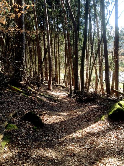 Zwischen den Bäumen glitzert das Wasser eines Teiches