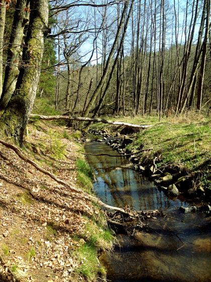 Vorübergehend mal raus aus dem Wald