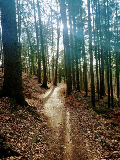 Auch die letzten Kilometer verlaufen zum größten Teil durch Wald