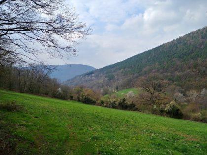 Wiesen & Hügel