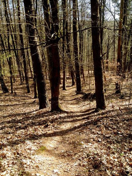 Und kaum ein paar Waldmeter später...