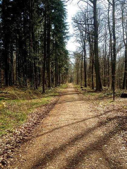 ...aber von jetzt an hallen fast im Sekundentakt Gewehrschüsse durch den Wald