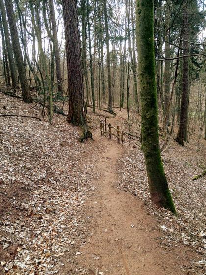 Gleich wieder recht schöner Wald