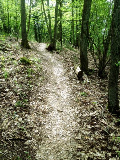 Die erste Etappe des Hildegardweges ist identisch mit der 13. Etappe des Saar-Hunsrück-Steigs