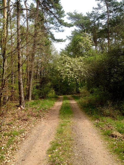 Auch heute zeigt der Wald viele Gesichter