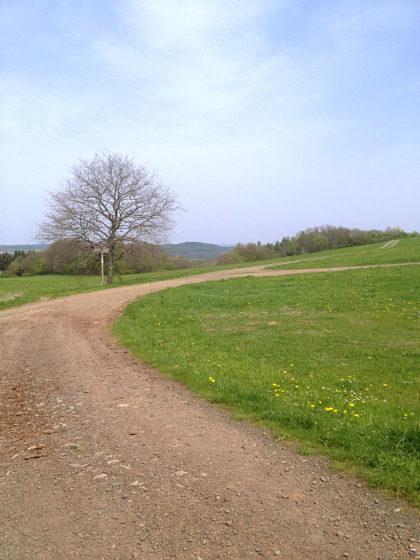 Auch in dieser Richtung sieht der Weg sehr einladend aus, ich wandere aber geradeaus weiter