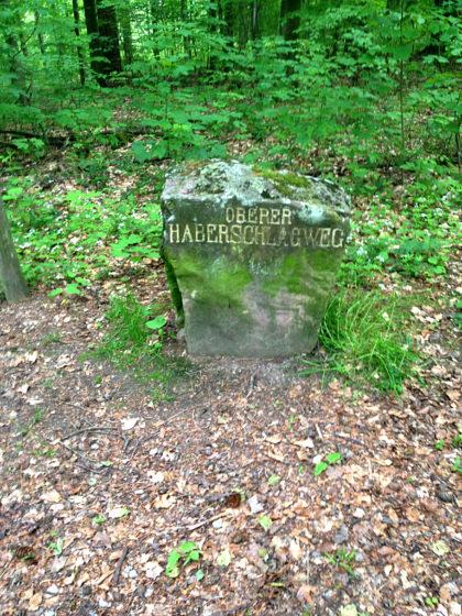Wir wandern kreuz und quer durch den Heidelberger Stadtwald