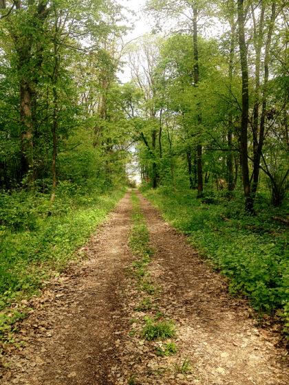 Das einzige kurze Waldstück des Tages