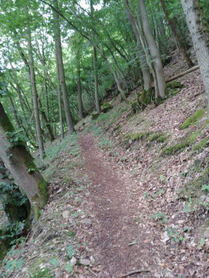 Der Anteil schmaler Waldpfade ist recht hoch
