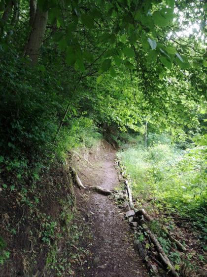 Schmale Waldpfade