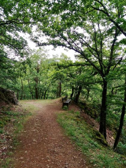 Zurück im Wald