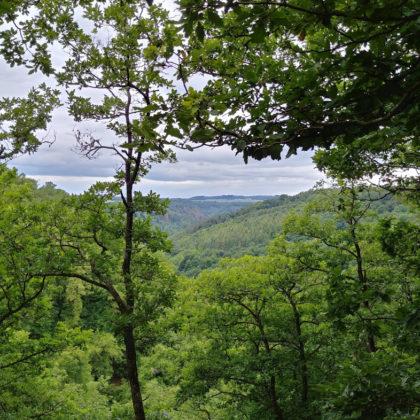 Immer wieder Blicke durch die Bäume in die Landschaft hinein