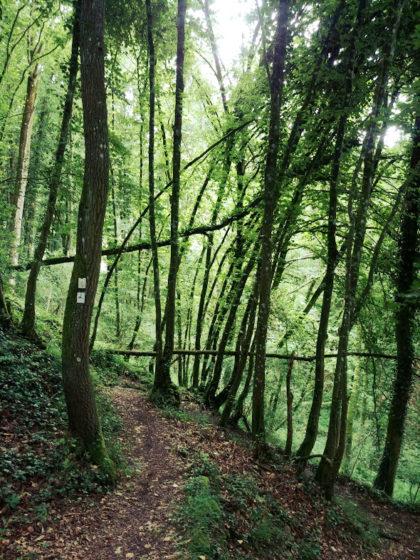 Der Lahnwanderweg ist insgesamt fast 300 Kilometer lang
