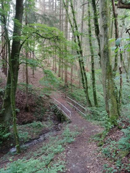 Hohe Luftfeuchtigkeit, deshalb ist es natürlich im Wald am angenehmsten