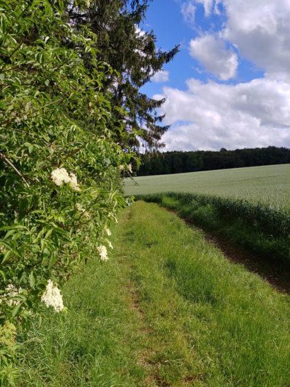 Die Wiesenpfade sind ein Markenzeichen des Lahnwanderweges, zumindest auf dieser Etappe