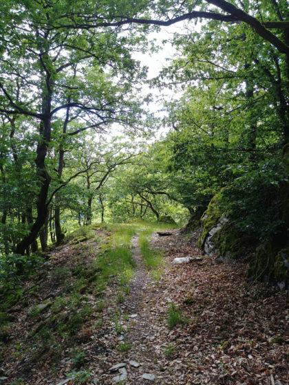 Der Lahnwanderweg ist 2012 eingeweiht worden