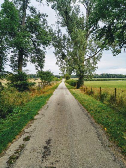 Schöne Asphaltpassage zwischen Wiesen und Feldern hindurch