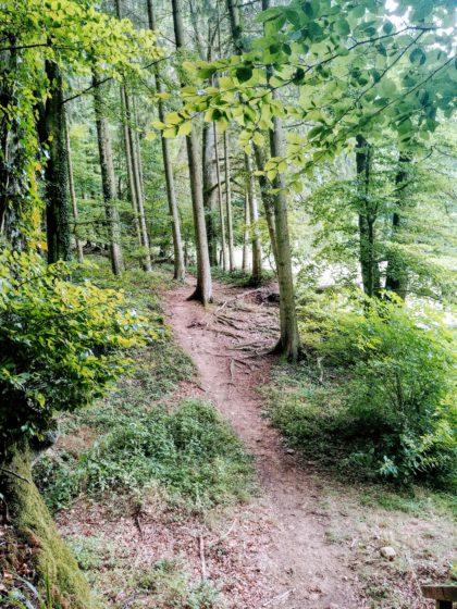Und wieder in den Wald hinein
