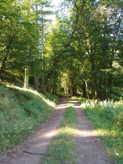 Deshalb biege ich früher in den Wald ab als beabsichtigt