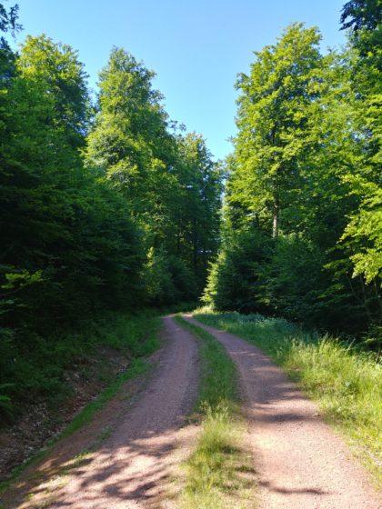Sommermorgenwald