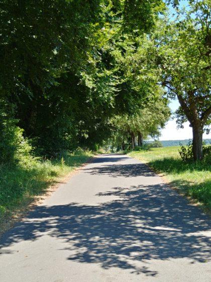 Hinter Wehingen, an Wiesen und Obstbäumen vorüber