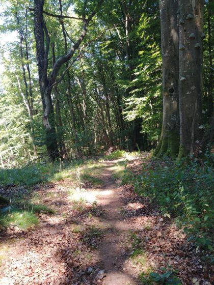 Der Pfad bietet viele schöne Waldeindrücke