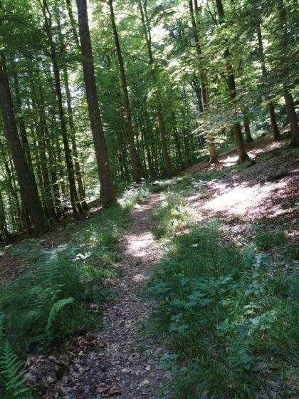 Immer wieder wechselen schmale Waldpfade ...