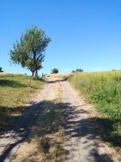 Ich verlasse den Viezpfad und wandere Richtung Tünsdorf