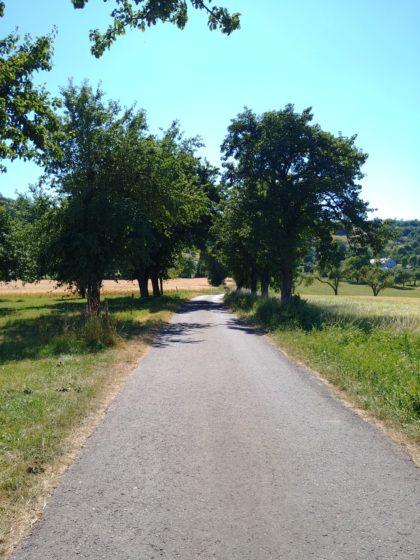 Wieder Obstbäume