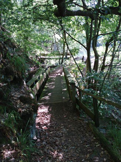 Auch das Wandern auf dem Saar-Hunsrück-Steig ist grandios