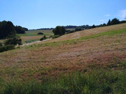 Typischer Fernblick für diesen Tag über stille Wiesen hinweg bis zu einem Hügelhorizont