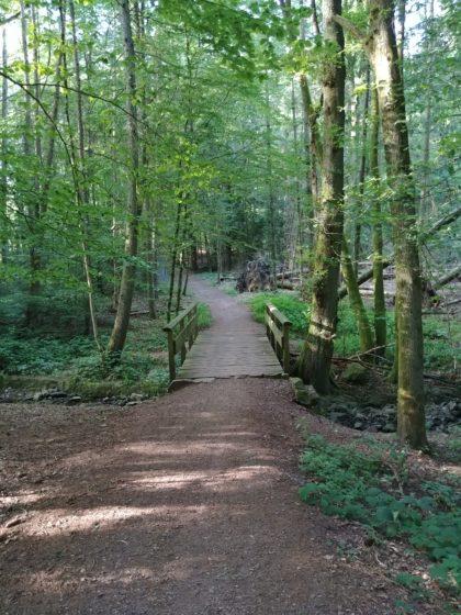 Auf dem Saar-Hunsrück-Steig weiter Richtung Mettlach