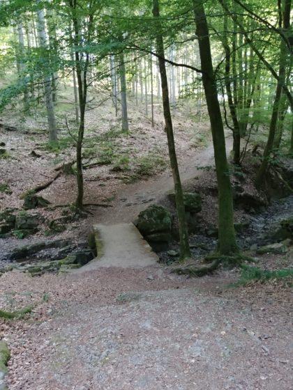 Auf diesem Abschnitt ist der Saar-Hunsrück-Steig identisch mit der Saarschleifen-Tafeltour