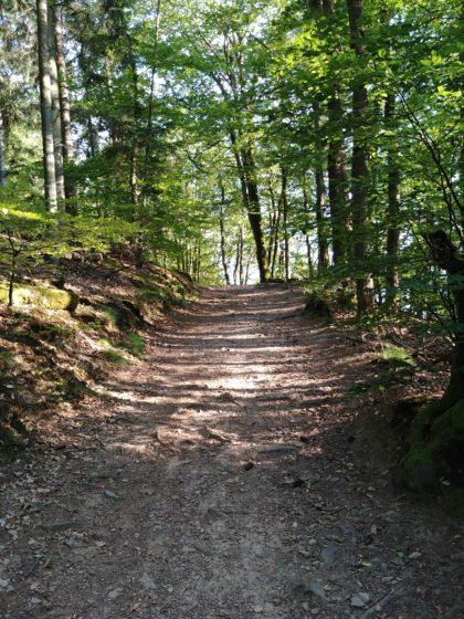 Noch immer sehr heller Wald