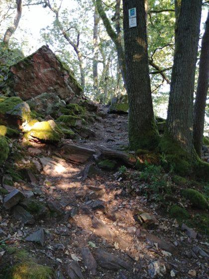 Auch die letzten Kilometer nach Mettlach hinunter sind großartig