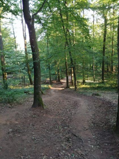 An vielen Stellen zieht das Licht sich bereits aus dem Wald zurück