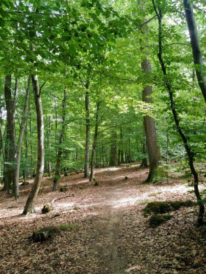 Ich habe den gesamten 18 Kilometer langen Weg praktisch für mich allein, begegne nur zwei Wanderern