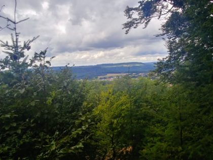Blick über die Baumspitzen hinweg
