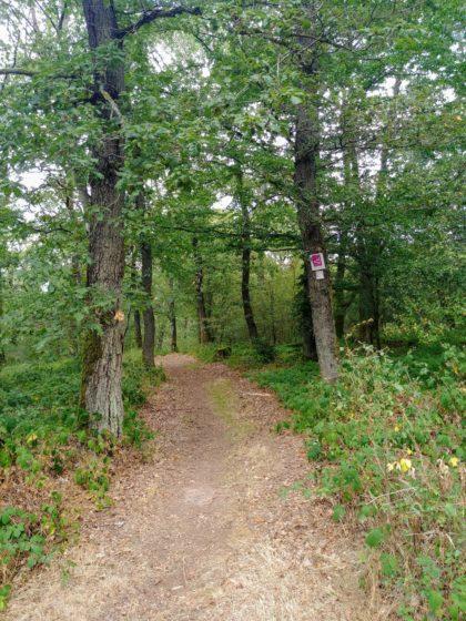 Viel Wald auf der Strecke