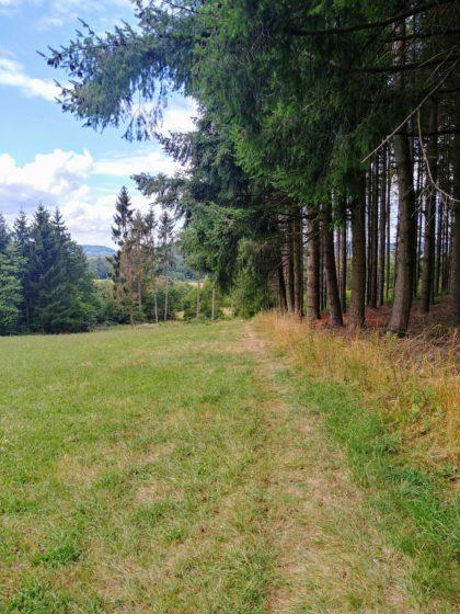 Waldrandwandern