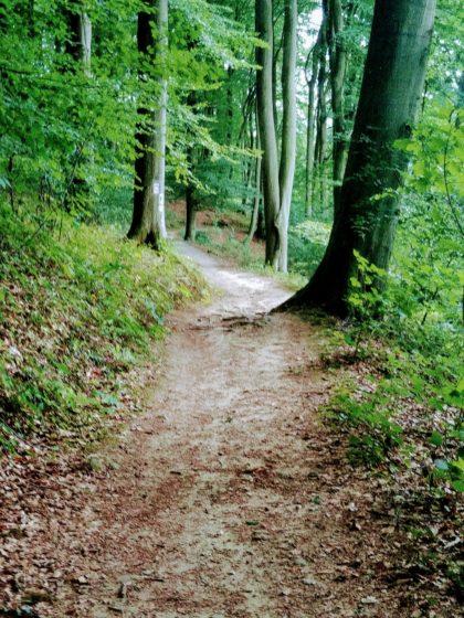 Noch ein kurzes Waldstück ...