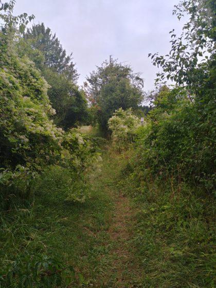 Über einen Wiesenpfad den Hügel hinauf