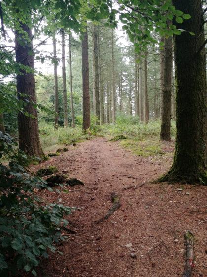 Die Art von Wald, die ich besonders mag