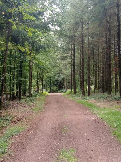 Und sofort wieder zurück in einem recht schönen Wald