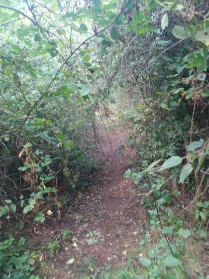 Grenzwertig überwucherte Passage; es ist sicher sehr schwierig, so einen Wanderweg hundertprozentig instandzuhalten