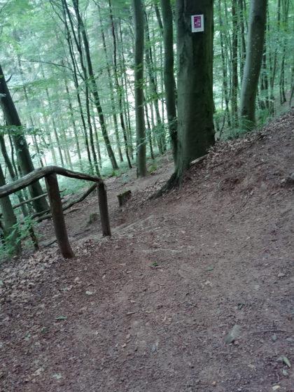 Noch eine Waldpassage