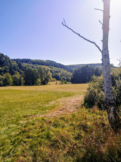 Außerhalb von Lauterecken, Blick über Wiesen und Hügel