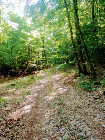 Der Wald wird immer unübersichtlicher und schließlich kehre ich doch um