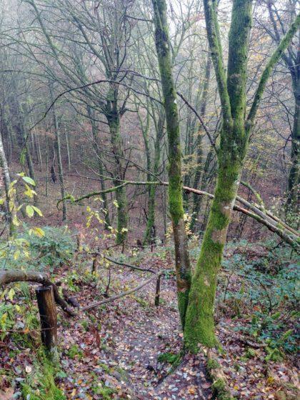Auf einem schmalen Pfad zum Horstbrunnen hinab
