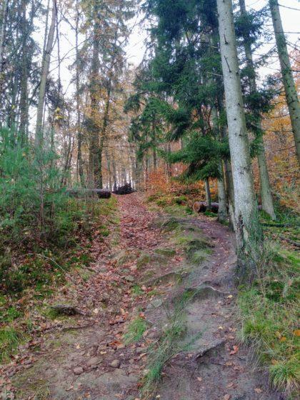 Hinter dem Eichertsfelsen führt der Weg steil bergauf